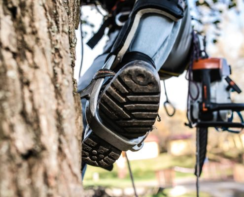 professional tree service in Slidell