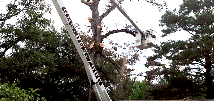 Pearl River and Slidell area tree service company