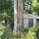 Tree Stuck by Lightning