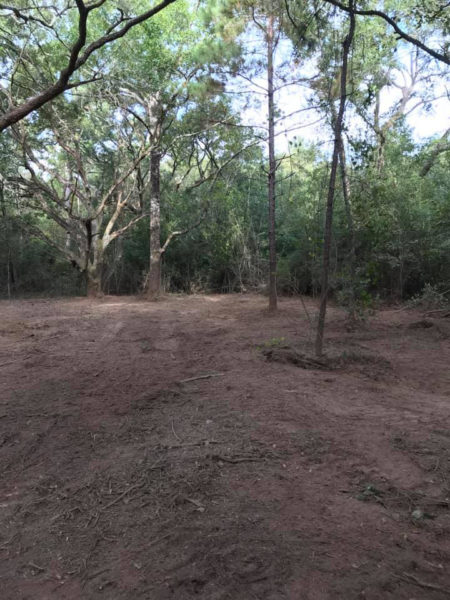 Land Clearing with Forestry Mulching